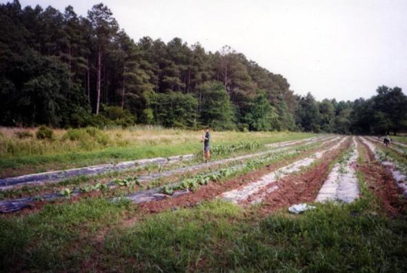Melon Fields 2000